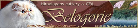 Himalayans & Exotics & Persians Cattery
